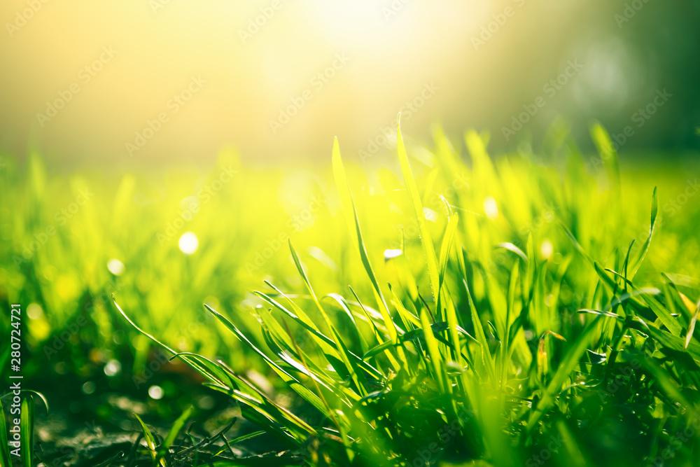 Fototapety, obrazy: Green grass background with sun light