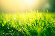 Green grass background with sun light