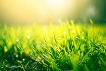 Green Grass Background With Sun Light