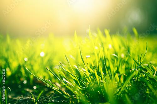 Fotomural  Green grass background with sun light