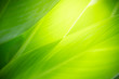 canvas print picture - Closeup nature view of green leaf on blurred greenery background in garden with copy space using as background natural green plants landscape, ecology, fresh wallpaper concept.