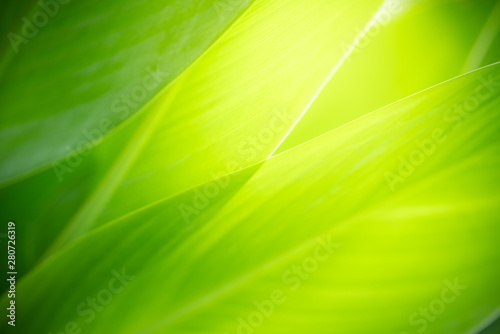 Montage in der Fensternische Lime grun Closeup nature view of green leaf on blurred greenery background in garden with copy space using as background natural green plants landscape, ecology, fresh wallpaper concept.