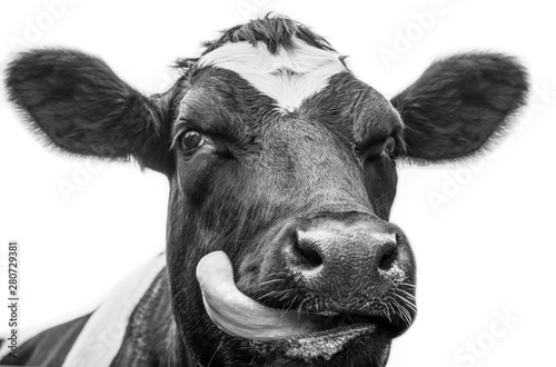 Fotobehang Koe A close up photo of a black and white cow