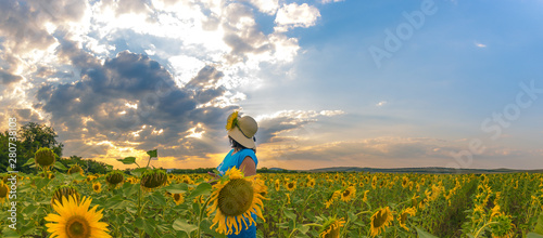 In de dag Zonnebloem Field with sunflowers