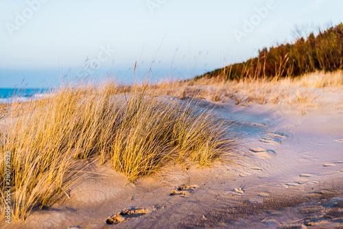 Foto auf AluDibond London Coast of the Baltic Sea at sunset. Sand dunes, plants and water splashes close-up. Latvia