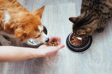 Owner Pours Dry Food To The Ca...