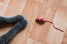 Cats Paws And A Toy Mouse On The Floor. View From Above.