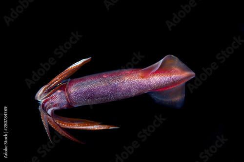 Fotografía  Squid during a blackwater dive in the Philippines