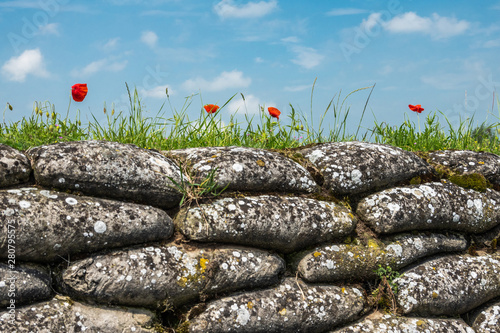 Fotografia Diksmuide, Flanders, Belgium -  June 19, 2019: Historic WW1 Trenches, called Dodengang along IJzer River, shows gray-brown stone-hard sandbags, green grass, red poppies