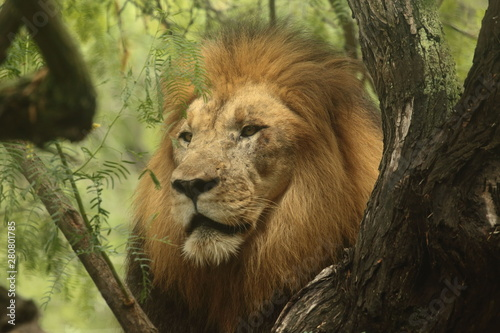 Photo portrait of a lion