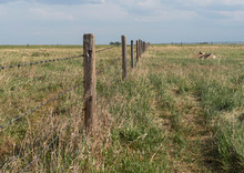 Barbed Wire Fence Bordering Farm Property In The Prairies Wild Grass Of Alberta