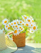 beautiful summer composition with chamomile flowers in Cup, braided hat in garden. Rural landscape background with Chamomile in sunlight. Summertime season. close up. soft selective focus