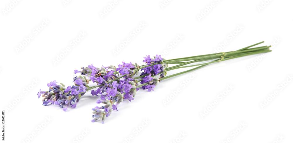 Fototapety, obrazy: Beautiful tender lavender flowers on white background