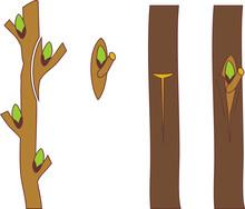 Spring Grafting Tree. Chip Bud...