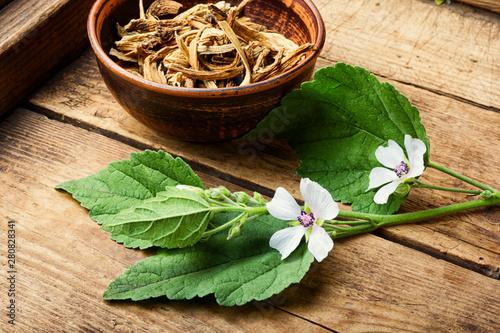 Photo  Medicinal plant althaea