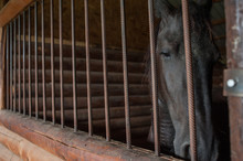 Horse At A Farm In A Stable Be...