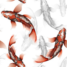 Koi Carps, Traditional Colorfu...