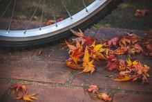 落ち葉と自転車 秋イメージ