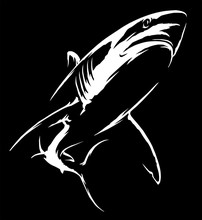Black And White Linear Paint Draw Shark Illustration Art