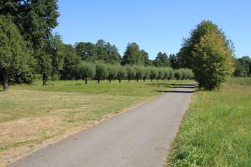 Fototapeta na wymiar Fahrradweg mit Kugelbäumen