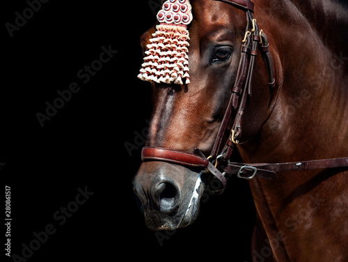 Fotografija andalusian horse in traditional spanish finery detail close-up isolated on black