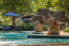 Luxury Swimming Pool In Tropic...