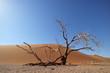 Leinwandbild Motiv Desert landscape with dead tree and red and red sand dune, Sossusvlei, Namibia.