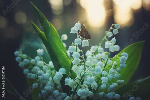 Photo Stands Lily of the valley Butterfly sat on a bouquet of white lilies of the valley in the forest at sunrise