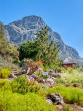 Kirstenbosch Botanical Garden In Cape Town, South Africa. Flowers In Bloom Near A Hut.