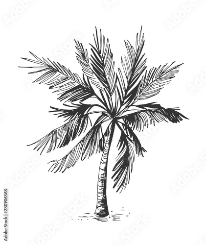 Sketch of palm tree. Hand drawn illustration converted to vector Wall mural