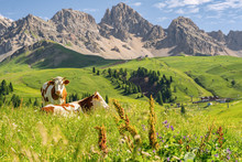 Scenic Alps With Cow On Green ...