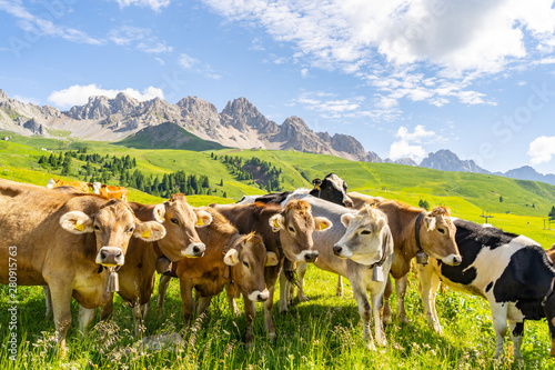 Aluminium Prints Alps Beautiful landscape with livestock on green pasture