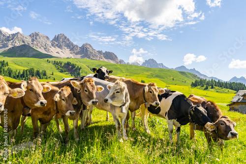 Fotografie, Obraz  Idyllic Alps with cow on green field