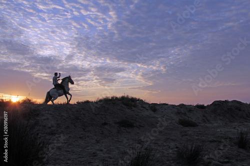 Photo  cavalier et son cheval