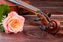 Pink Rose And Old Brown Violin...