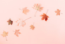 Autumn Creative Composition. B...