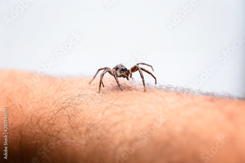 poisonous spider over person arm, poisonous spider biting person, concept of arachnophobia, fear of spider Wallpaper Mural