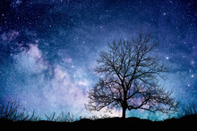 Tree Standing Silhouetted Against The Milky Way