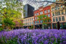 Flowers Along Market Street In...