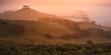 Misty Sunrise Over The Distinctive Pine Topped Colmer's Hill Near Bridport, Dorset