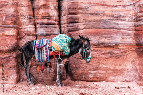 Photo sur Aluminium Ane Bedouin donkey with saddle