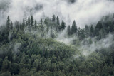 Drzewa w porannej mgle. Widok na mglisty las. - 281037798