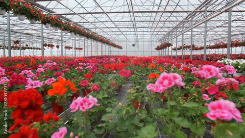Large glass greenhouse with flowers Tableau sur Toile