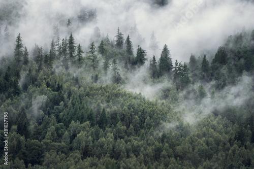 drzewa-w-porannej-mgle-widok-na-mglisty-las