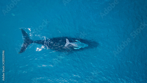 Humpback Whale with Calf Wallpaper Mural