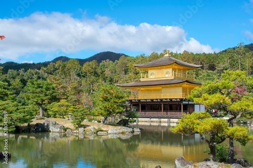 Poster de jardin Kyoto Reluciendo en el bosque