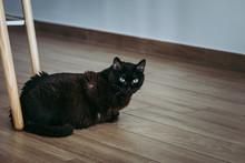 Portrait D'un Joli Chat Noir