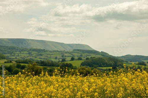 Foto auf Leinwand Beige Yellow canola fields near the Black mountains of England and Wales.