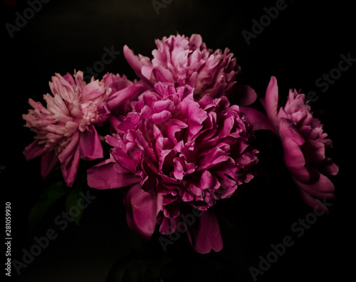 Autocollant pour porte Fleur Big bright peony against black backdrop. Floral background.