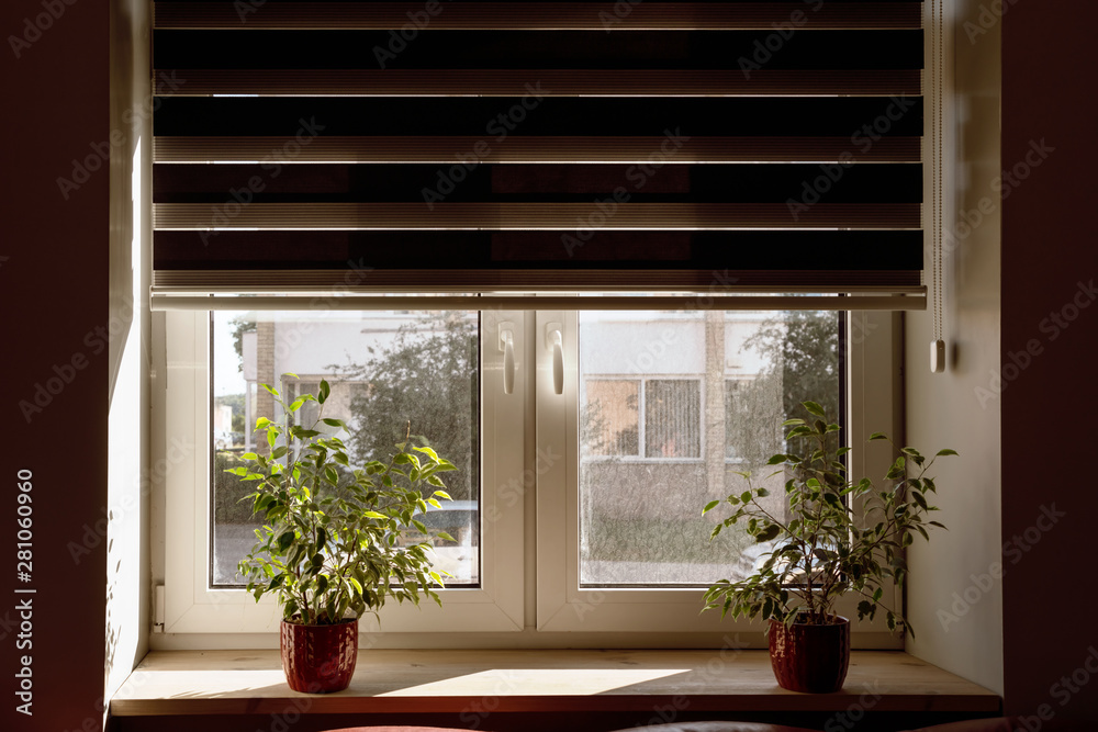 Fototapety, obrazy: window shutter in apartment are open, two flowerpots on windowsill with flowers, day on street